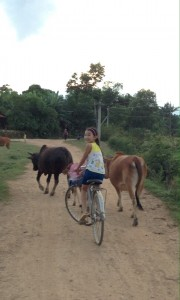 The cows come home and so do the school children. (taken a short distance from our homestay)