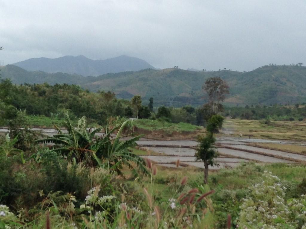 Beautiful scenery of new rice plantings.