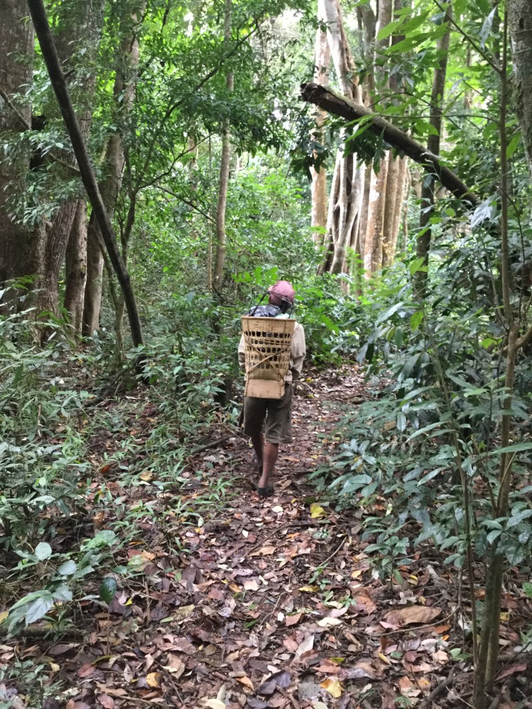 Our hosts daily walk through the jungle. We were fortunate to be able to share a typical day of his work.