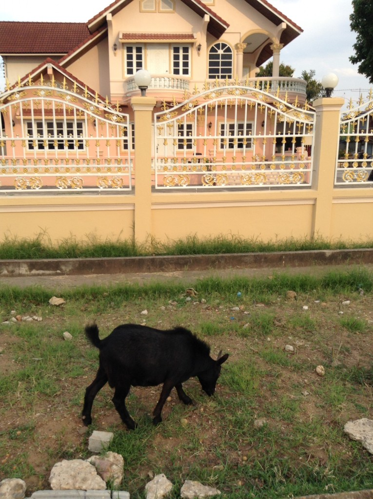 This was taken opposite the Mekong river. Goats roam the grassy areas.