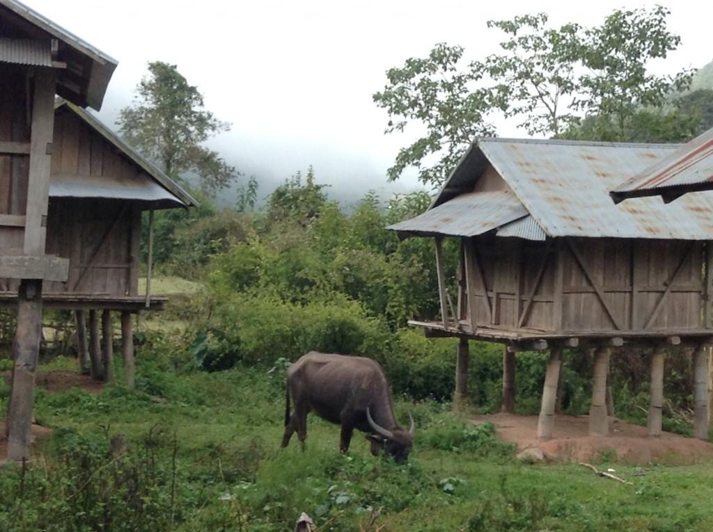 A typical village scene.