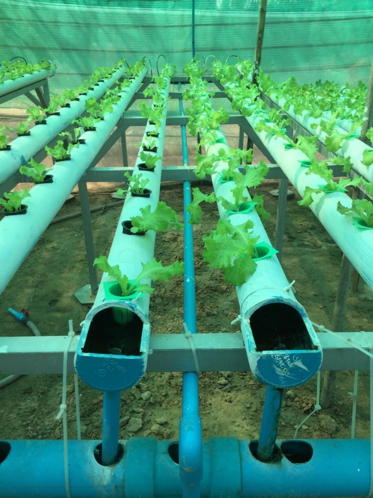 The hydroponic gardens at Trailblazers.