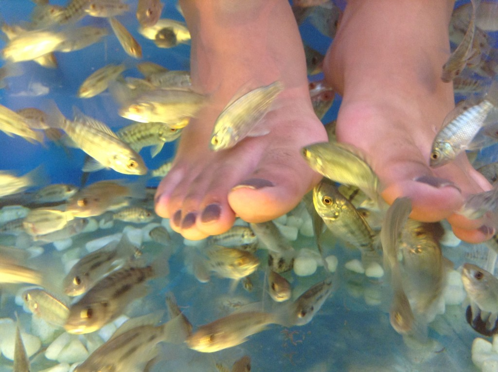 Siem reap february 8 21st our southeast asia adventure for Fish eating dead skin pedicure