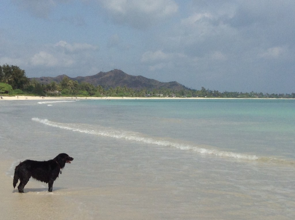 A wonderful beach only two blocks from our little home in Kailua.