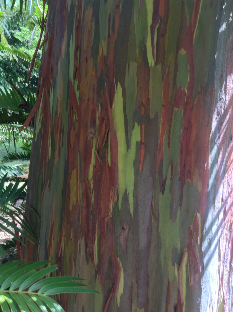 An interesting tree in the botanical gardens in Honolulu.