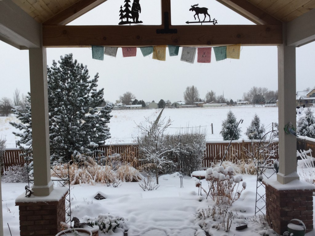 Our back yard from the kitchen area looking out.