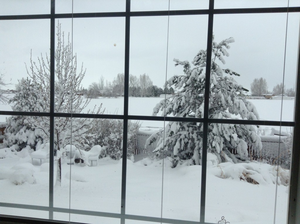 Our back yard after the big dump of snow on March 4th!
